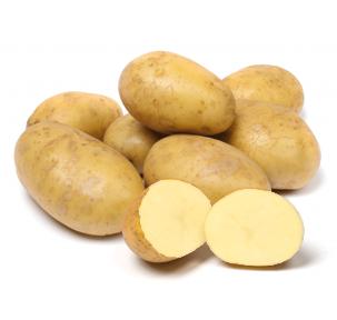 Pootgoed Triplo kopen plantaardappelen